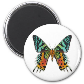 Sunset Butterfly Magnet