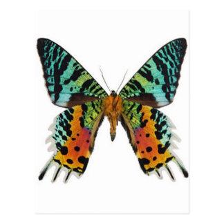 Sunset Butterfly Postcard