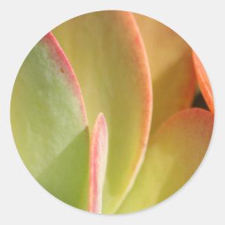 Sunset Cactus 3 sticker