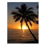 Sunset coconut palm tree Fiji peace and joy Postcard