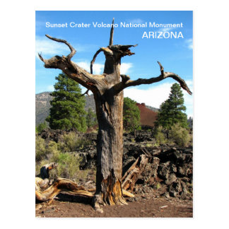 Sunset Crater Volcano Postcard!