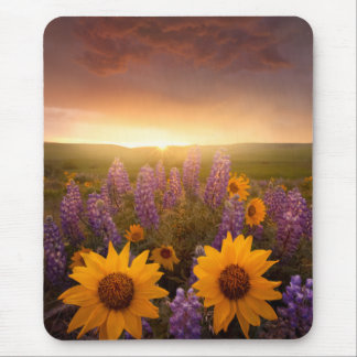 Sunset Daisies Mouse Pad