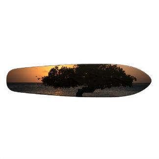Sunset Divi Divi Tree Skateboard Decks