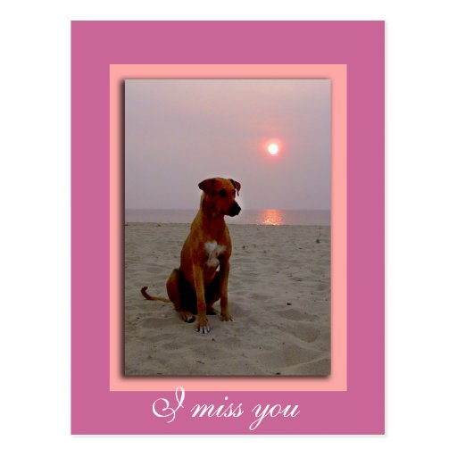 sunset dog, I miss you Postcard