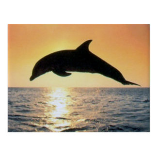 Sunset Dolphin Postcard