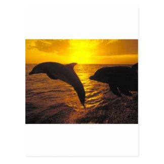 Sunset Dolphins Postcard