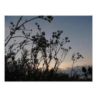 Sunset field of wild flowers poster