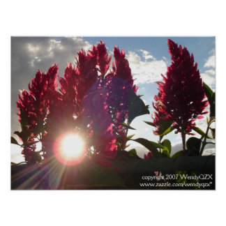Sunset Flame Flowers* Poster