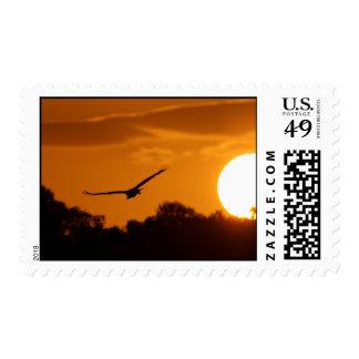 Sunset Flight Postage Stamps
