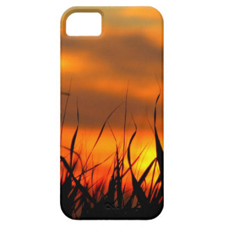Sunset Grassy Roots iPhone 5 Covers