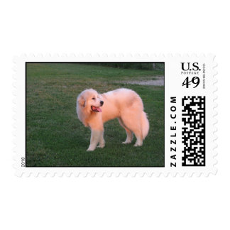Sunset Great Pyrenees Postage Stamp