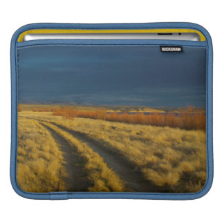 Sunset highlights the red bark of bushes iPad sleeve