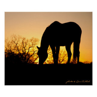 Sunset Horse Silhouette Poster