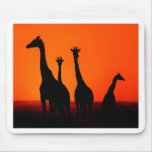 Sunset in Africa Mousepads