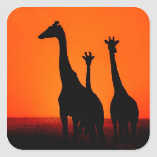 Sunset in Africa Square Sticker