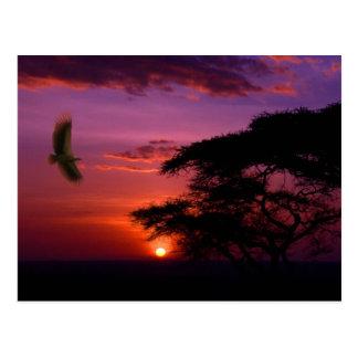 Sunset in Serengeti, Tanzania Postcard