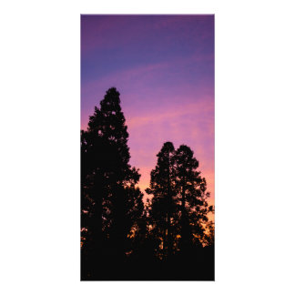 Sunset in the forest personalized photo card