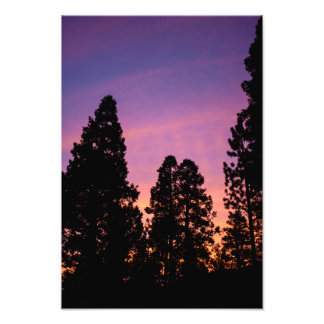 Sunset in the forest photograph