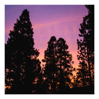 Sunset in the forest photo print