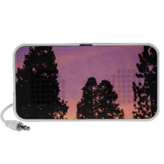Sunset in the forest mp3 speakers