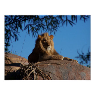 Sunset Lion Poster