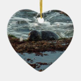 Sunset Lit Harbor Seal I at San Diego Ceramic Ornament
