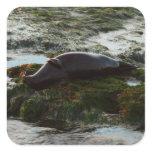 Sunset Lit Harbor Seal II at San Diego