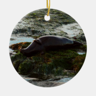 Sunset Lit Harbor Seal II at San Diego Ceramic Ornament