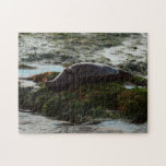 Sunset Lit Harbor Seal II at San Diego Jigsaw Puzzle