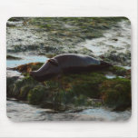 Sunset Lit Harbor Seal II at San Diego Mouse Pad