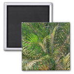 Sunset Lit Palm Fronds 2 Inch Square Magnet