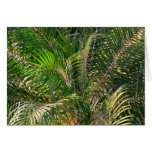 Sunset Lit Palm Fronds Card