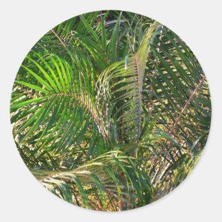 Sunset Lit Palm Fronds Classic Round Sticker