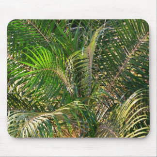 Sunset Lit Palm Fronds Mouse Pad