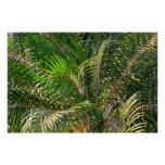 Sunset Lit Palm Fronds Perfect Poster