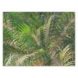 Sunset Lit Palm Fronds Tissue Paper