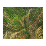 Sunset Lit Palm Fronds Warm Tropical Wood Canvases