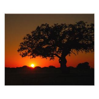 Sunset Live Oak Photo Print