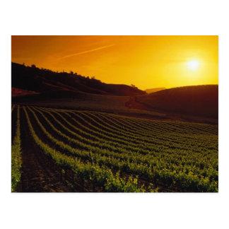 Sunset Napa Valley Postcard