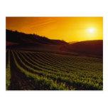 Sunset Napa Valley Postcards