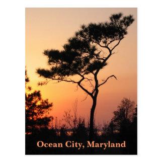 Sunset Ocean City Postcard