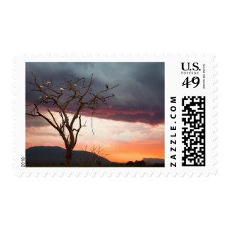 Sunset On Kandheri Swamp With African Spoonbills Postage