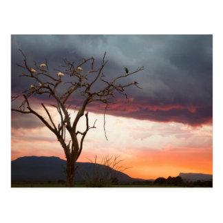 Sunset On Kandheri Swamp With African Spoonbills Postcard