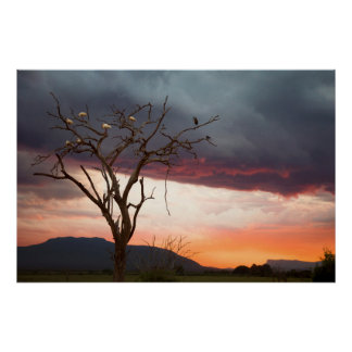 Sunset On Kandheri Swamp With African Spoonbills Poster