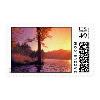Sunset On The Tree Postage Stamps