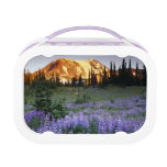 Sunset over Mt. Adams and a sub-alpine meadow Lunch Box