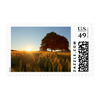 Sunset Over Wheat Field Stamp
