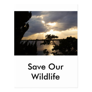 Sunset Over Wildlife Refuge Postcard