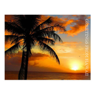 sunset palm greetings postcard