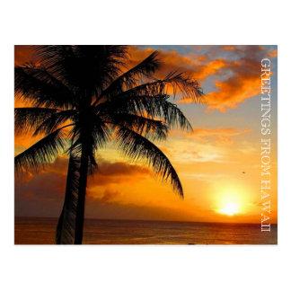 sunset palm greetings postcard